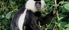 5 Days Wildlife and Chimpanzee Safari in Rwanda