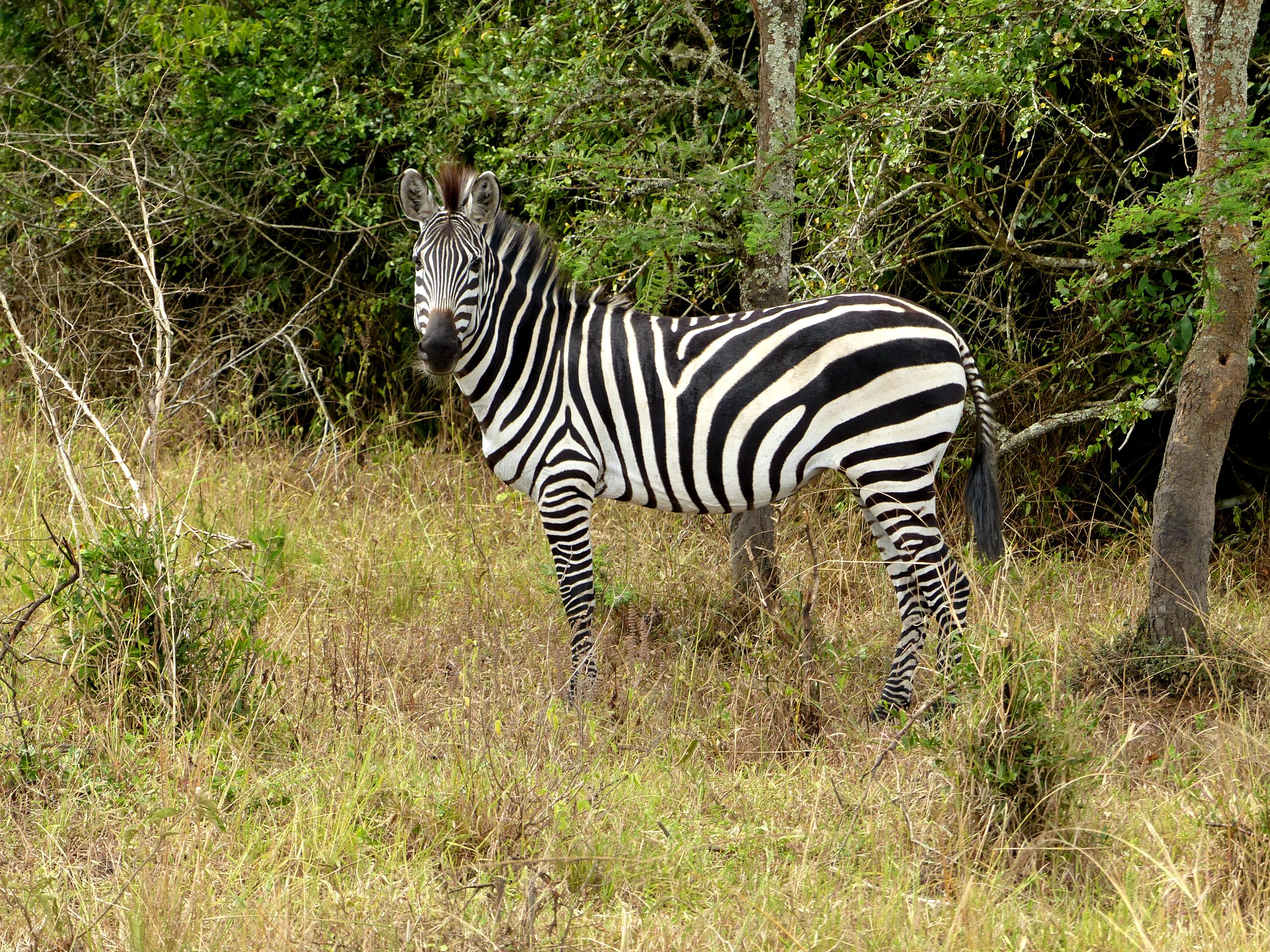 11 Days Gorillas & Wildlife Safari in Rwanda