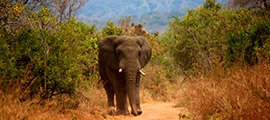 9 Days Rwanda Wildlife Safari