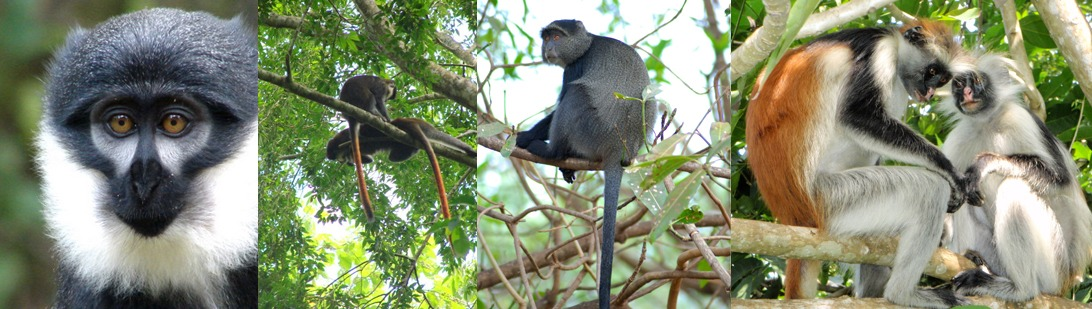 kibale-national-par-primates