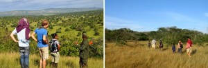naturewalks-mburo-np