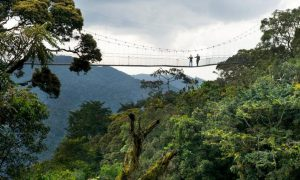 Hiking Nyungwe Forest National Park