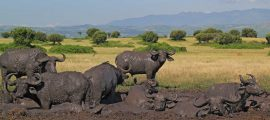 20 Days Rwanda Uganda Wildlife Comprehensive Safari