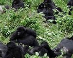 3-days-rwanda-safari