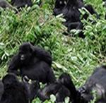 4-days-rwanda-safari
