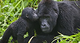 5-days-gorilla-safari