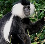 5-days-rwanda-safari