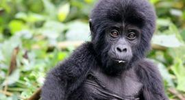 6-days-rwanda-safari