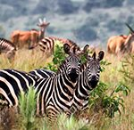 7-days-rwanda-safari