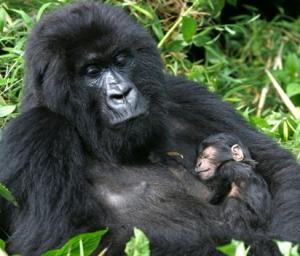 12 Days Gorilla Safari Uganda & Wildlife Safari tour in Uganda