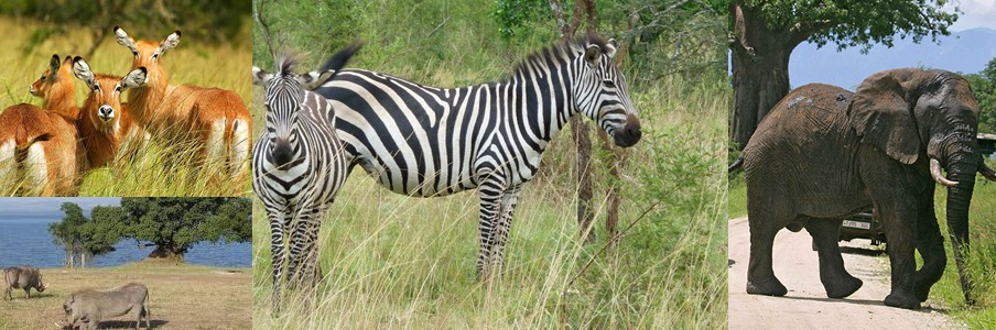 3 Days Uganda Wildlife Safari to Lake Mburo NP