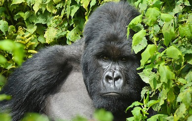4 Days Double Rwanda Gorilla Trekking Safari Tour