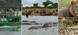 6 Days Uganda Safari Adventure