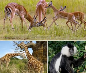 rwandas-wildlife