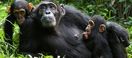 uganda-rwanda-safari1