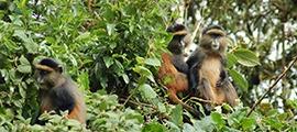 uganda-rwanda-safari4