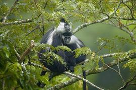 ugandarwanda-safari2