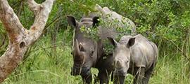 ziwa-rhinos-uganda