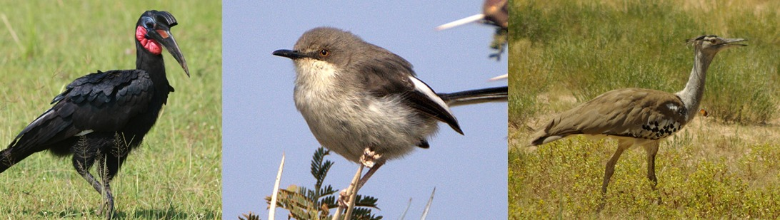 birds-kidepo-national-park