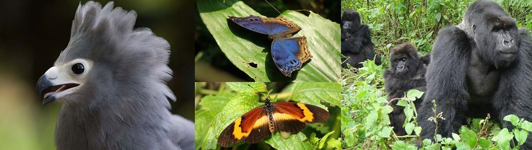 bwindi-forest-national-park