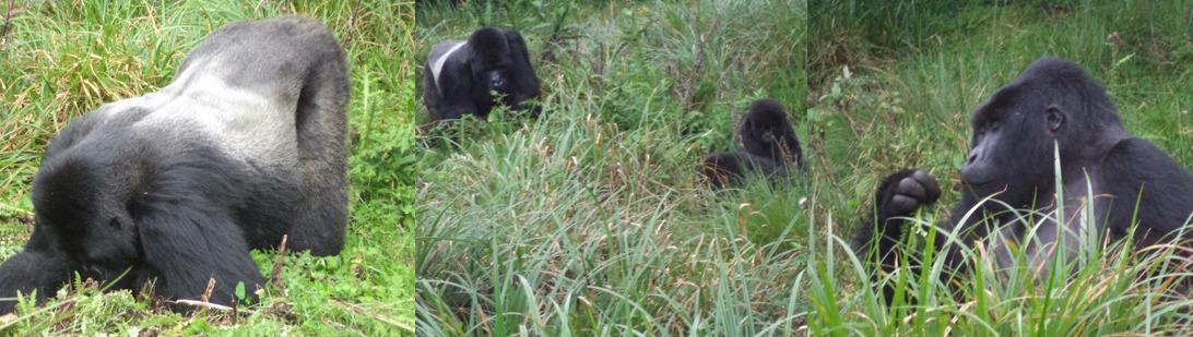 gorillas-in-volcanoes-rwanda