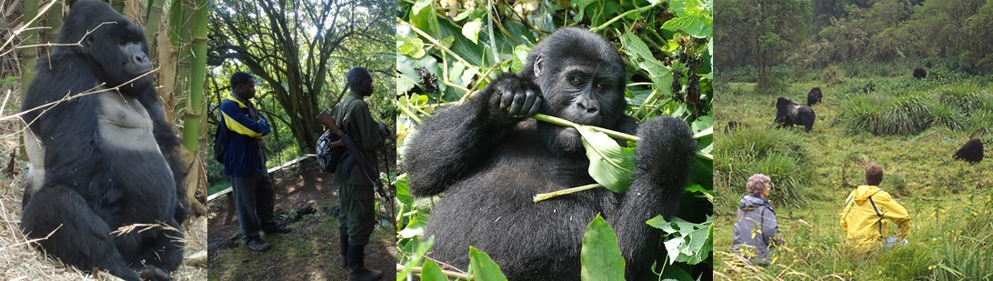 mgahinga-gorilla-trekking