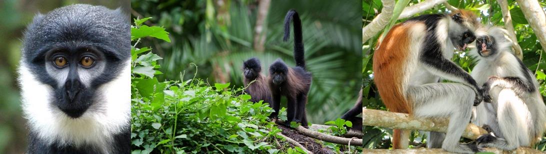 primates-kibale-ational-park