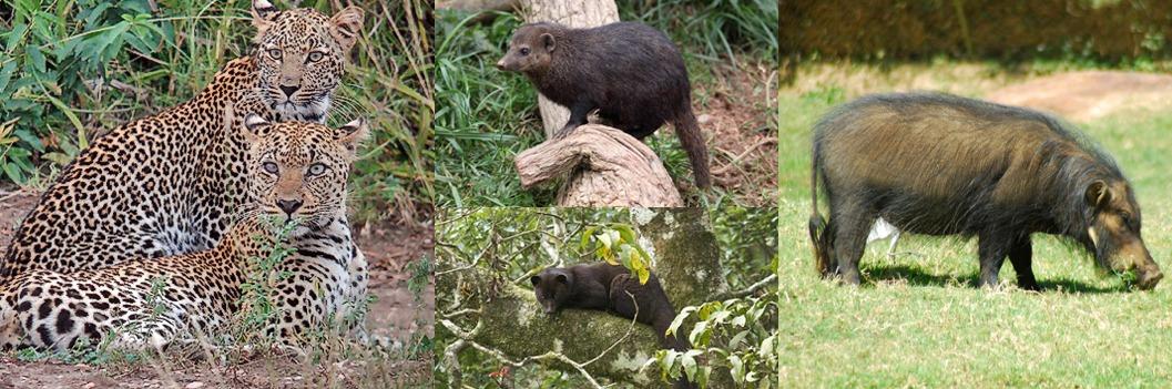 wildlife-kibale-np
