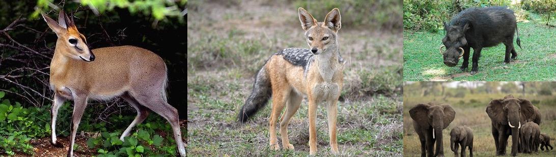 wildlife-mgahinga