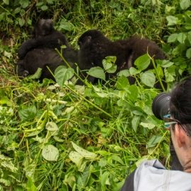 Have you been wondering why gorilla trekking is expensive?