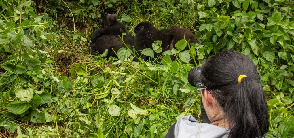 2 days gorilla trekking safari Volcanoes National Park Rwanda