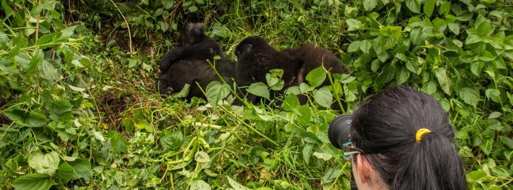 2 Days Rwanda Uganda Gorilla Safari