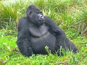 2 day Uganda gorilla safari from Kigali Rwanda