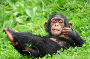 9 Days Rwanda Gorilla Safari, Chimpanzee trekking & Canopy walk