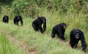 20 Days Rwanda Uganda Wildlife Safari Tour