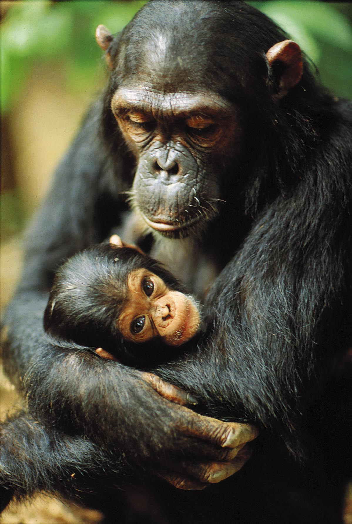 15 Days Rwanda Uganda Gorilla Trekking Tour