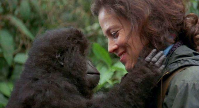 Dian Fossey rwanda