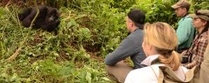 6 days Rwanda gorilla safari to Volcanoes National Park and Nyungwe forest chimp trekking