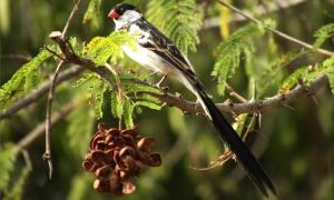 Bird Watching Nyungwe Forest National Park