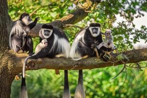 6 Days Rwanda Safari