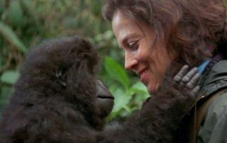 The 'Dian Fossey: Secrets in the Mist