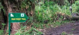 Hiking the Dian Fossey Grave