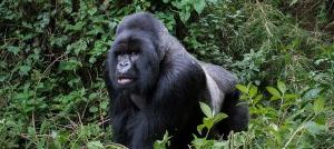 12 Days Gorilla Safari in Rwanda and Uganda