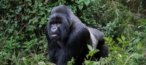 8 Days Uganda Rwanda Gorilla Trekking Safari
