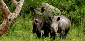10 Days Uganda Rwanda Wildlife Safari