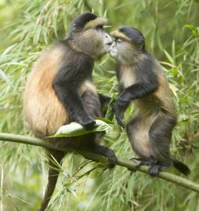 6 Days Adventure Safari in Uganda and Rwanda