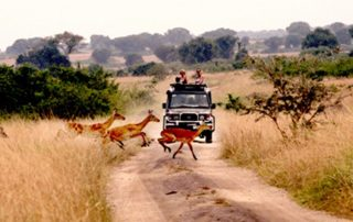 A game drive at Queen Elizabeth National Park