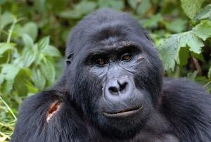 7 days Rwanda gorilla <a href=